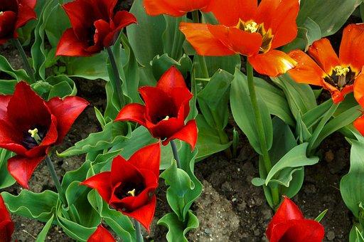 Flower, Spring, Nature, Beautiful, Bloom, Pink