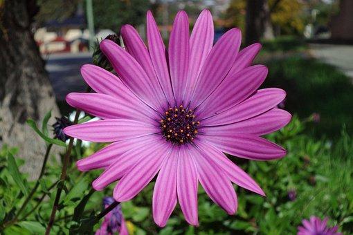 Plant, Flora, Flower, Wild, Nature, Summer, Spring