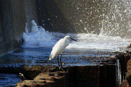 Animal, Sea, River, Estuary, Breakwater, Wave