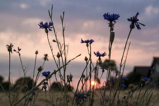 Sunrise, Back Light, Rural, Summer, Field, Agriculture