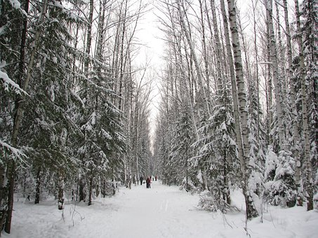 Winter, Forest, Trail, Walking, Winter Forest, Snow
