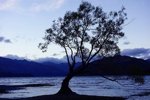 Nature, New Zealand, Wanaka