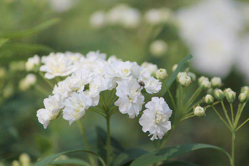 Nature, Flower Buds, Floral, White Green, Insect