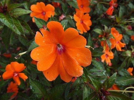 Flower, Garden, Pink, Nature, Spring, Bloom, Blossom