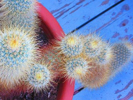 Rustic, Blue, Cactus, Terra Cotta, Cactus Garden