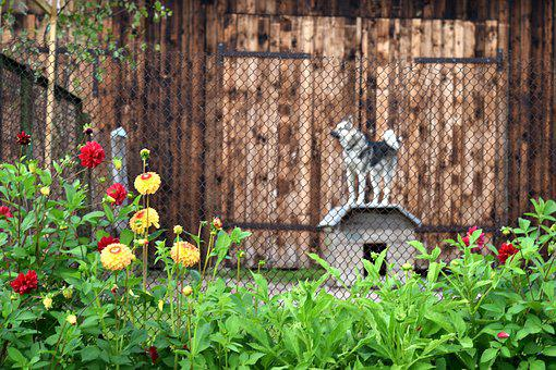 Dog, Kennel, Village, Rural, Fence, Flowers, Country