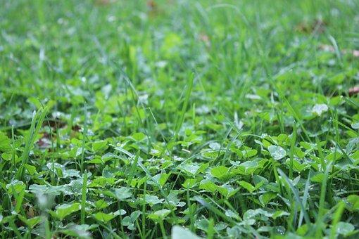 Grass, Green, Nature, Natural