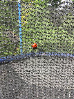 Ladybug, Network, Garden, Summer, Nature, Close, Insect
