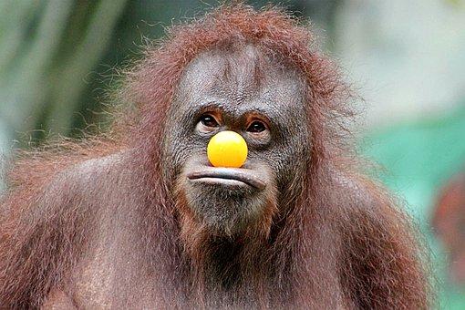 Monkey, Funny, Fun, Face, Cool, Zoo