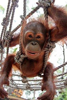 Monkey, Funny, Animal Portrait, Animal World