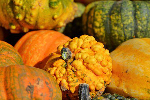 Pumpkin, Fruit, Orange, Autumn, Cucurbita Maxima