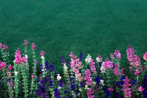 Pink, Purple, Green, Flowers, Garden Flowers, Meadow