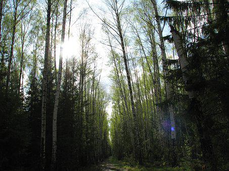 Spring, Forest, Sky, Blue, Sun, Nature, Trees