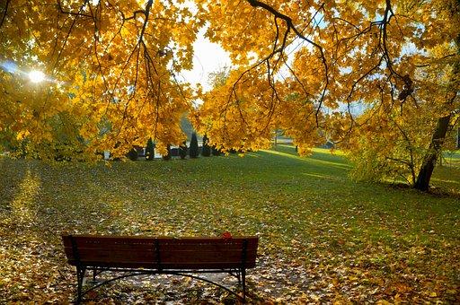 Background, Autumn, Leaves, Yellow, Texture, Foliage