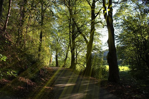 Forest Path, Trees, Sun, Rays, Nature, Walk, Away