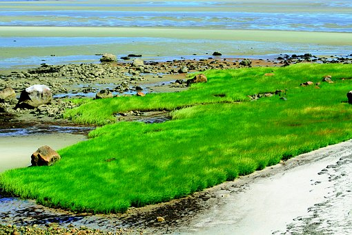Grass, Wind, Bay, Nature, Green, Sky, Environment