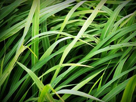Grass, Field, Soccer, Background, Lawn, Green, Turf