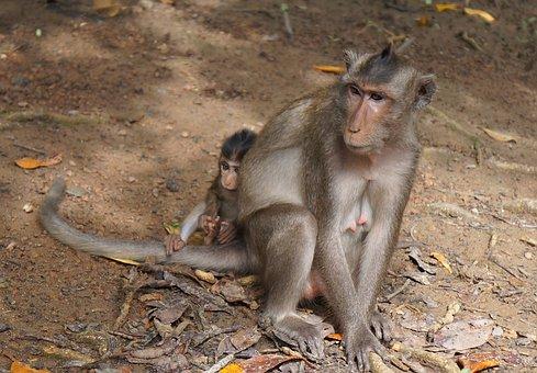 Monkey, Mother And Son Monkey, Animal