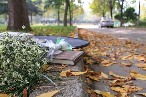 Autumn, Street, Books