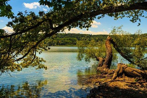 Mainau Island, Tree, Water, Shrubs, Autumn, Mood, Sky