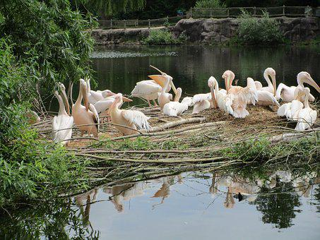 Birds, Pond, Holland