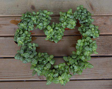Heart, Heart Plants, Crowns, Botany, Flora, Plant