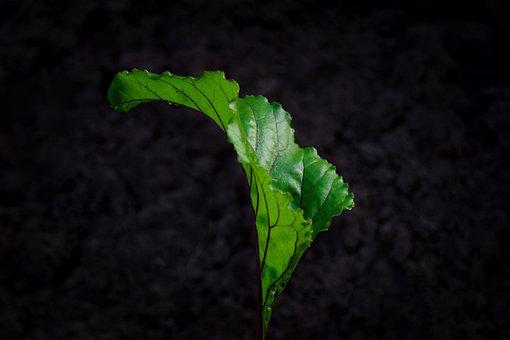 Leaf, Herb, Black Background, Healthy, Natural, Fresh