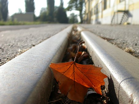Seemed, Leaf, Leave, Mood, Transience, Autumn, Red