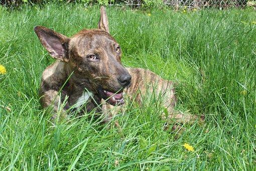 Smile, Rescue Dog, Happy, Animal, Cute, Love, Pet