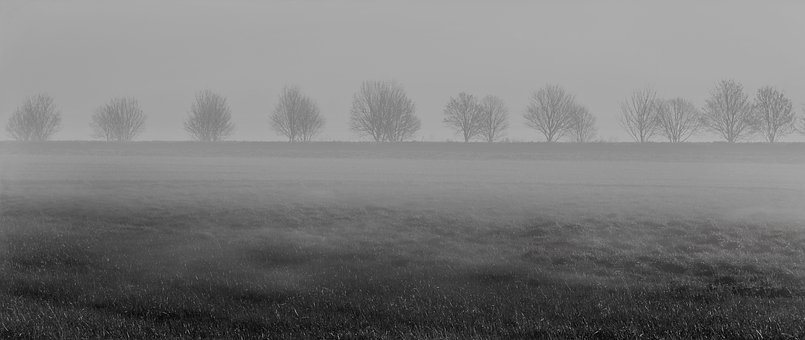 Fog, Trees, Meadow, Black And White, Gloomy, Dark