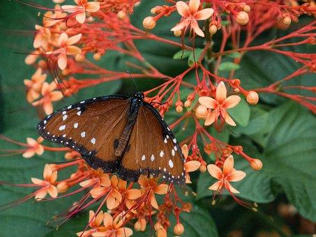Butterfly, Monarch, Monarch Butterfly, Flower, Pink