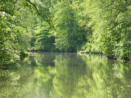 River, Nature, Water, Landscape, Waters, Trees