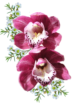 Orchid, Pink, With, Wax Flowers
