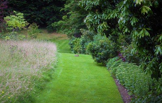 Rabbit, Green Path, Path, Gardens, Wales