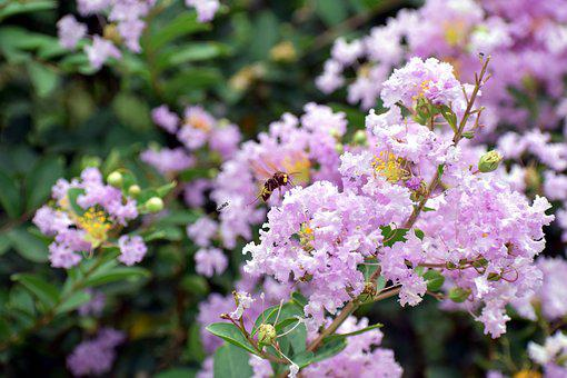 Honey Bee, Purple White, Small Flowers, Pollination