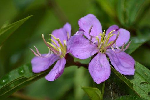 Flora, Flower, Wild Flower, Purple, Petal, Plant, Wild