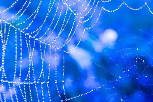 Cobweb, Drip, Dew, Dewdrop, Spectrum, Refraction