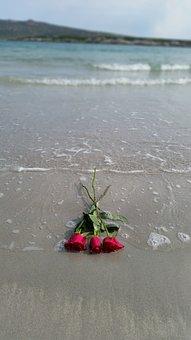 Rose, Beach, Water, Sand, Sea, Ocean, Romantic, Red