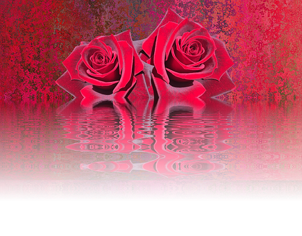 Roses, Love, Rose Bloom, Valentine's Day, Nature