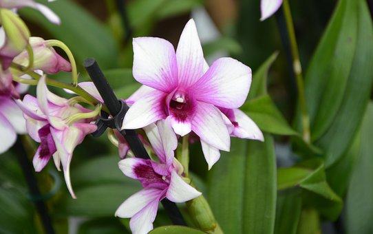 Flower, Flowers, Pink Parma, Garden, Flowering, Violet