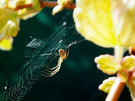 Spider, Cobweb, Garden, Close, Nature, Network, Weaving