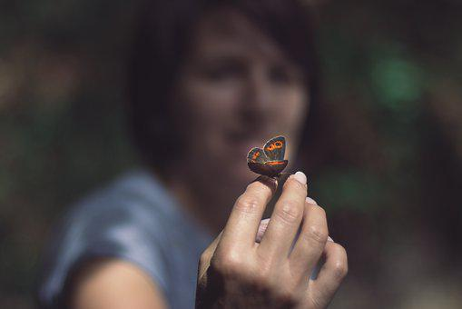 Butterfly, Hand, Insect, Wing, Nature, Close
