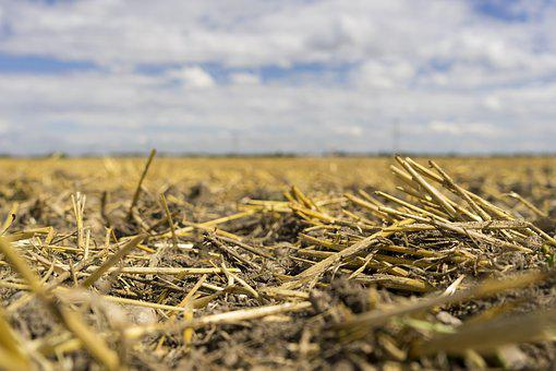 Arable, Field, Cereals, Oedland, Dry