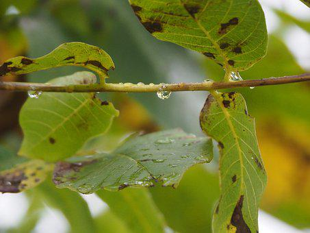 Leaf, Raindrop, Background, Nature, Green, Leaves, Rain