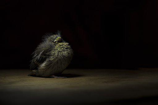 Wildlife, Chick, Bird, Baby, Spring, Cold, Hungry