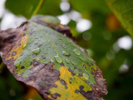 Leaf, Autumn Color, Drip, Colorful Leaves, Fall Color