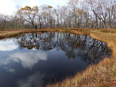 Lake, Forest, Tundra, Swamp, Reflection, Nature