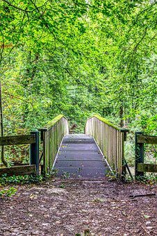 Bridge, Forest, Forest Path, Nature, Green