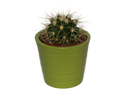 Cactus, Plant, Png, Isolated, Prickly, Green, Spur