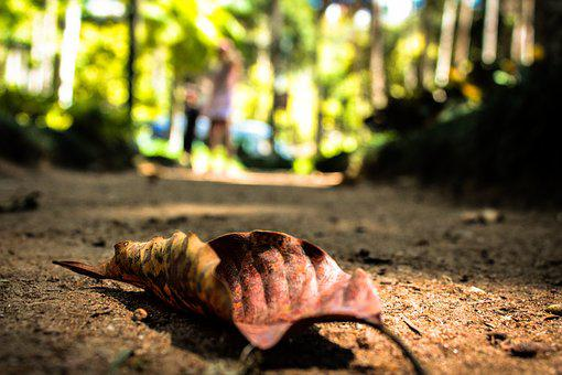 Path, Leaves, Nature, Woods, Fallen Leaves, Landscape